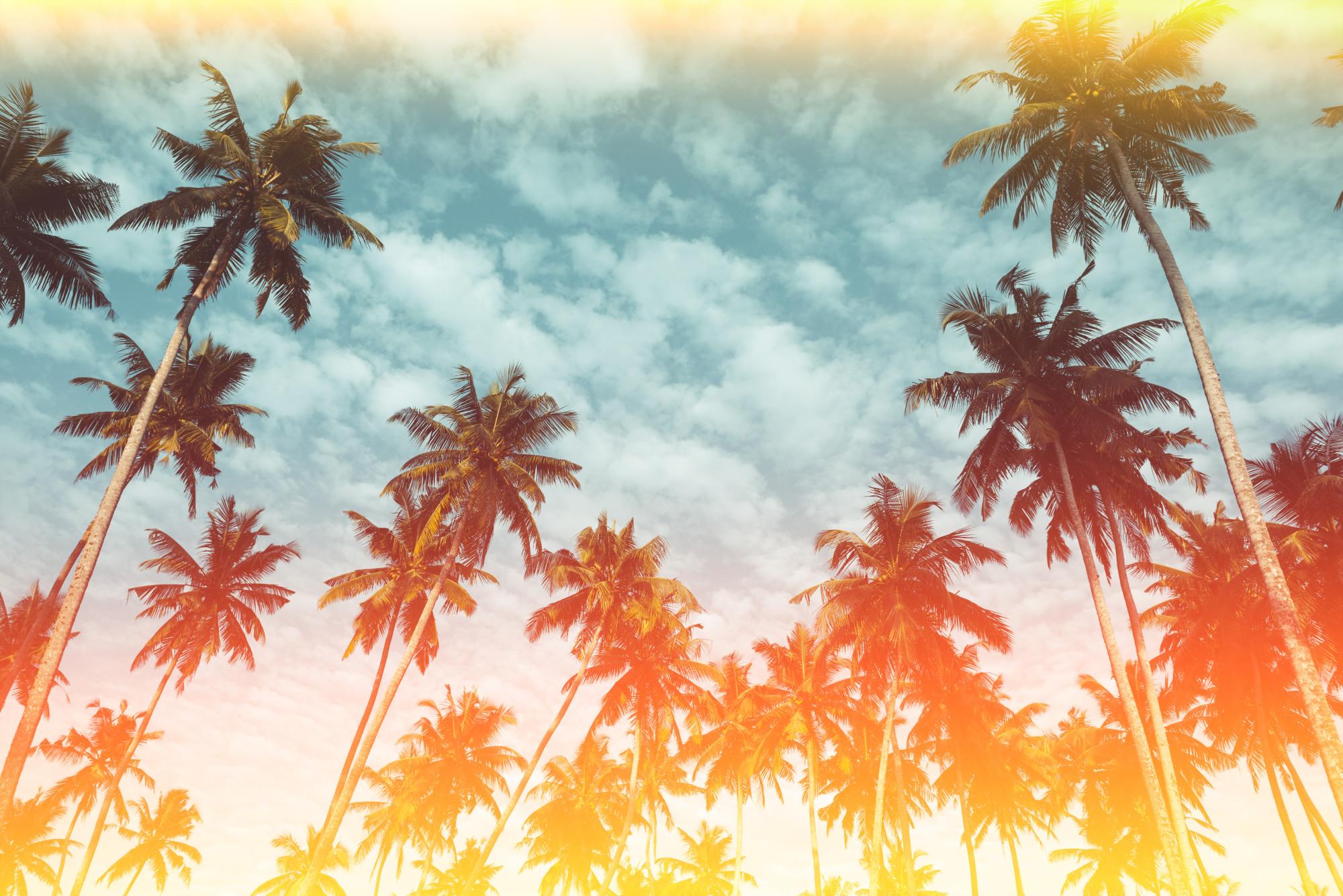 Vacation to Miami