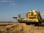 New Holland Clayson 135