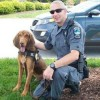 Georgia police dog dies after being left in handler's hot patrol car