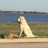 Dog stands guard over canine buddy hit by car